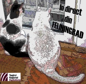 In direct din Feliningrad